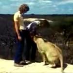 子供の頃から育てたライオンを野生に返し、久しぶりに再会すると…