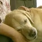 【感動の再会】引退する盲導犬が連れて行かれる場所とは…?!