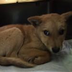 成長ぶりに涙が溢れる!殺処分寸前の犬が災害救助犬として活躍!