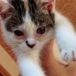 両目がつぶれた子猫が保護され回復していく姿に感動で涙がホロリ